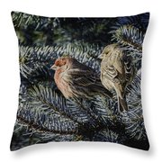 A Couple Of House Finch Throw Pillow by LeeAnn McLaneGoetz McLaneGoetzStudioLLCcom