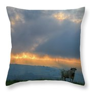 A Cow In The High Prairies  At Sunset Throw Pillow