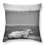 A Cow On The Beach Throw Pillow