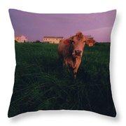 A Cow Walks Near Beachhouses Throw Pillow