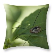 A Daddy Longlegs Spider Sits On A Leaf Throw Pillow