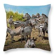 A Dazzle Of Zebras Throw Pillow