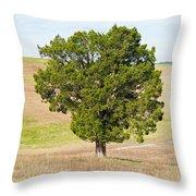 A December Cedar Throw Pillow