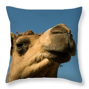 A Dromedary Camel At The Lincoln Throw Pillow