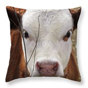 A Face You Can Love - Cow Art #609 Throw Pillow