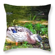 A Female Mallard Duck Is See Searching For Food 1 Throw Pillow