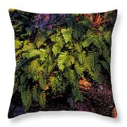A Fern Botanical By H H Photography Of Florida Throw Pillow