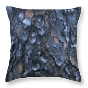A Fire Scarred Tree Trunk Whose Thick Throw Pillow