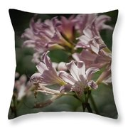 Peppermint Surprise Lily - A Floral Abstract Throw Pillow