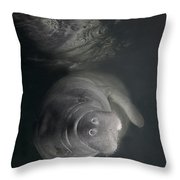 A Florida Manatee In The Warm Waters Throw Pillow