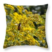 A Flower That Bees Prefer Throw Pillow by Guy Ricketts