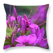 A Fly And A Flower Throw Pillow