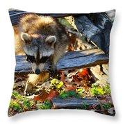 A Foraging Raccoon Throw Pillow