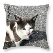 A Friendly Barn Cat Throw Pillow