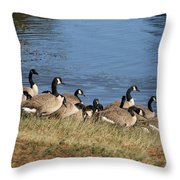 A Gathering Of Geese Throw Pillow