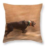 A German Shetland Hunts For Pheasant Throw Pillow