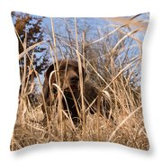 A German Shetland Searches For Pheasant Throw Pillow