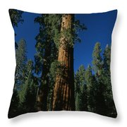 A Giant Sequoia Tree Towers Throw Pillow