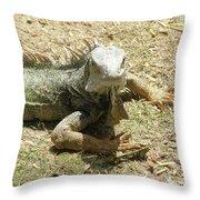 A Glaring Common Iguana On Aruba's Wild Side Throw Pillow