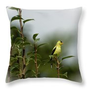 A Goldfinch In A Pear Tree Throw Pillow