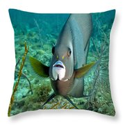 A Gray Angelfish In The Shallow Waters Throw Pillow by Michael Wood