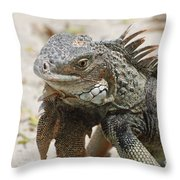 A Gray Iguana With Spines Along It's Back Throw Pillow