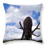 A Grazing Bull Elk Up Close Throw Pillow