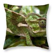 A Green Chamaeleonidae Throw Pillow