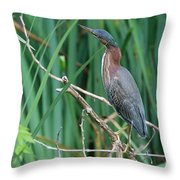 A Green Heron By The Canal Throw Pillow