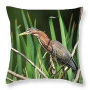 A Green Heron Stalks Prey Throw Pillow