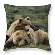 A Grizzly Bear Cub Stretches Throw Pillow by Michael S. Quinton