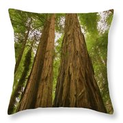 A Group Giant Redwood Trees In Muir Woods,california. Reaching F Throw Pillow