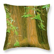 A Group Giant Redwood Trees In Muir Woods,california. Throw Pillow