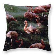 A Group Of Flamingos At The Folsom Throw Pillow