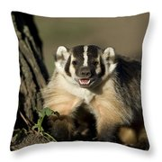 A Hand-raised Badger At The Home Throw Pillow