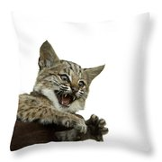 A Hand-raised Bobcat Reacts As Its Held Throw Pillow