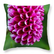 A Haunted Past Throw Pillow
