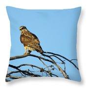 A Hawks Eye View Throw Pillow