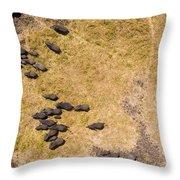 A Herd Of 100+ Elephants, Sw Corner Throw Pillow