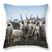 Grey Cattle Herd Throw Pillow