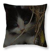A Hiding Kitten Throw Pillow