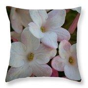 A Hint Of Pink Throw Pillow