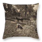 A Horse In The Field Throw Pillow