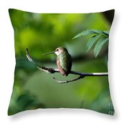A Hummingbird Rests Throw Pillow