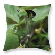A Jack In The Pulpit  Grows In The Mist Throw Pillow
