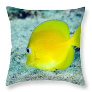 A Juvenile Blue Tang Searching Throw Pillow