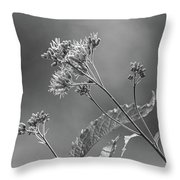 A Lazy Summer Day - Joe Pye Weed 2 Bw Throw Pillow