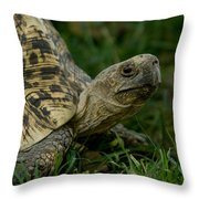 A Leopard Tortoise At The Lincoln Throw Pillow