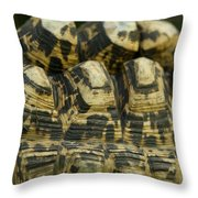 A Leopard Tortoise On The Move Throw Pillow