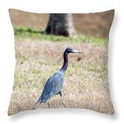 A Little Blue Heron Throw Pillow